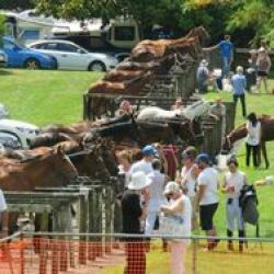 Pirongia Boxing Day Races
